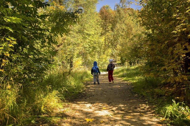 Лес детей стоковая фотография rf