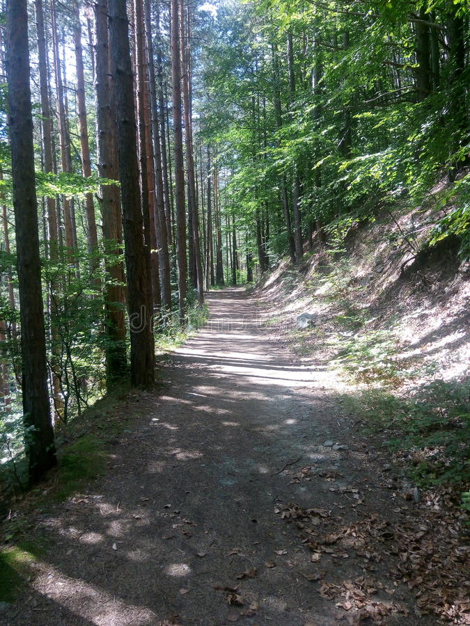 Лес ехал стоковые фотографии rf