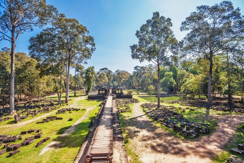 Лес джунглей на области Angkor Wat стоковые изображения rf