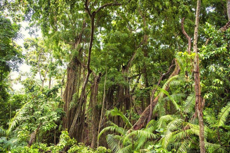 Лес джунглей стоковое изображение rf