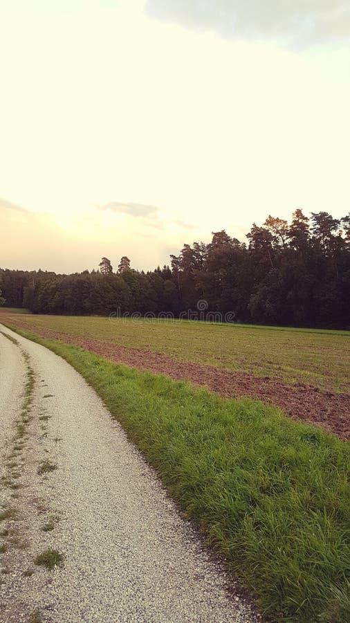 Лес захода солнца заволакивает проселочная дорога пути стоковое фото
