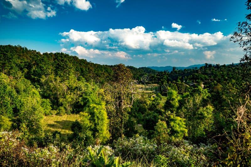 Лес зимы в Таиланде стоковое изображение