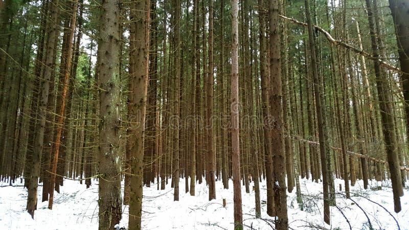 Лес зимы в центральной России стоковое изображение