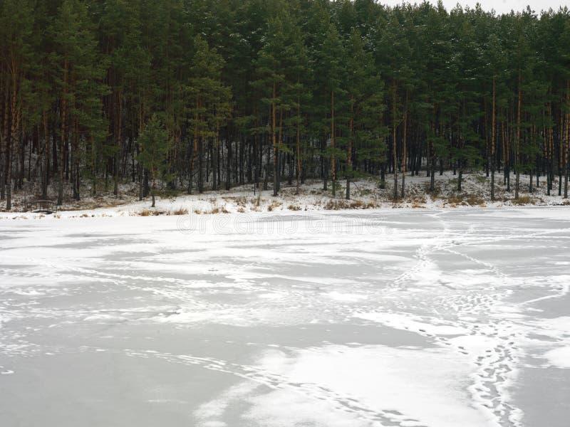 Лес зимы за рекой стоковая фотография