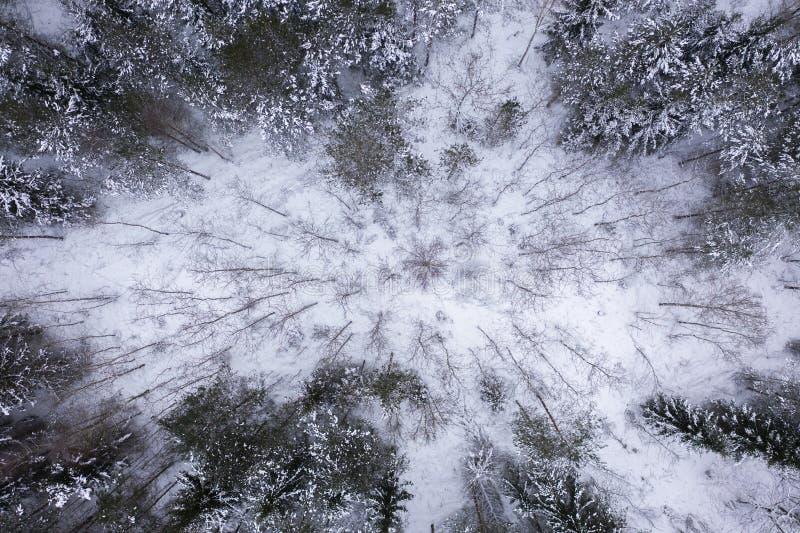 Лес зимы от точки зрения трутня стоковое изображение