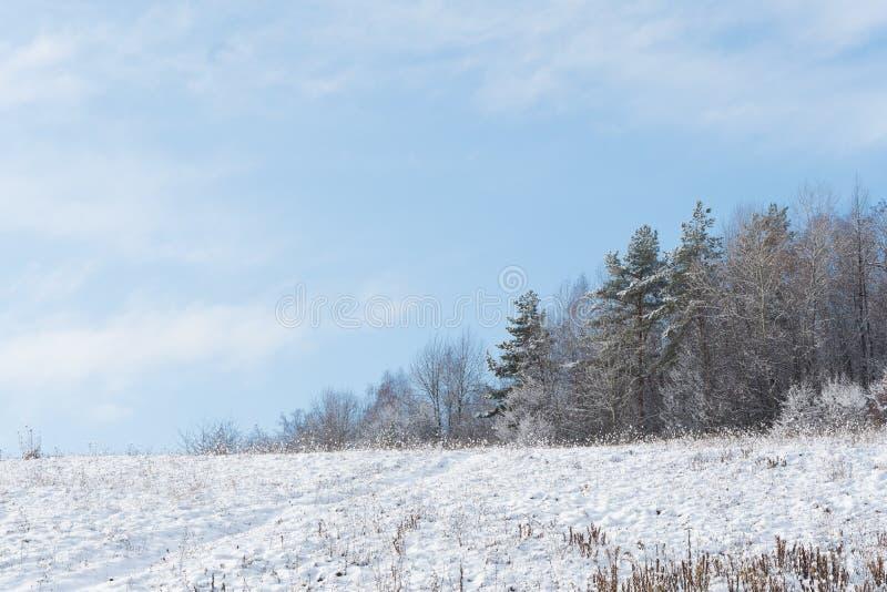 Лес зимы предусматриванный в снеге стоковое изображение