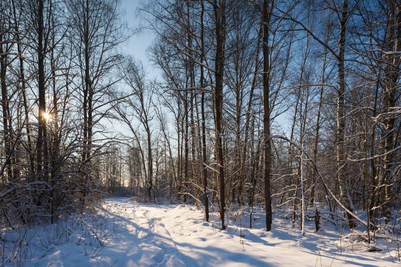 Download Лес зимы стоковое фото. изображение насчитывающей карта - 37931404