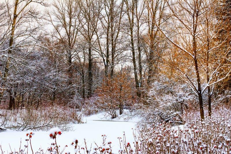 Лес зимы Snowy и замороженное озеро зима температуры России ландшафта 33c января ural звезды абстрактной картины конструкции укра стоковое фото