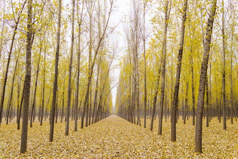 Лес золота стоковая фотография