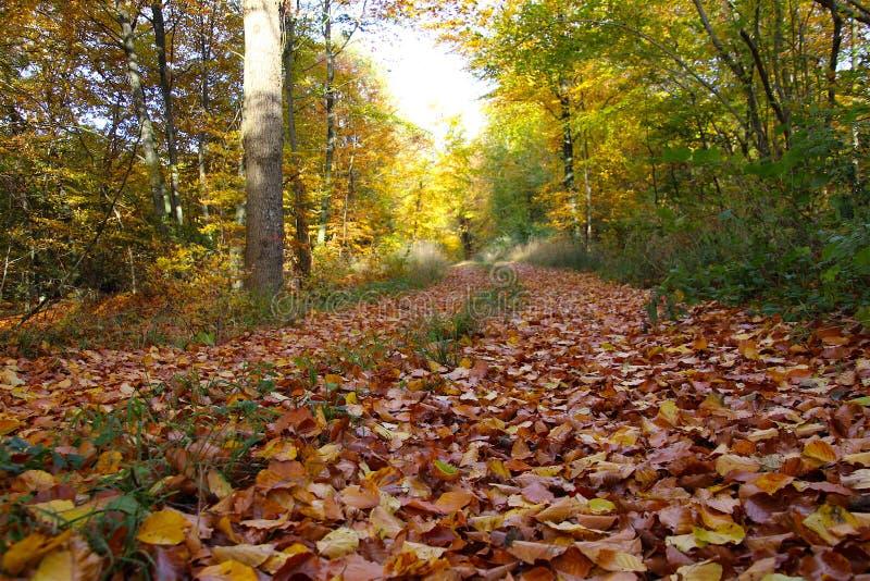 Лес линяет свое великолепие стоковые фото