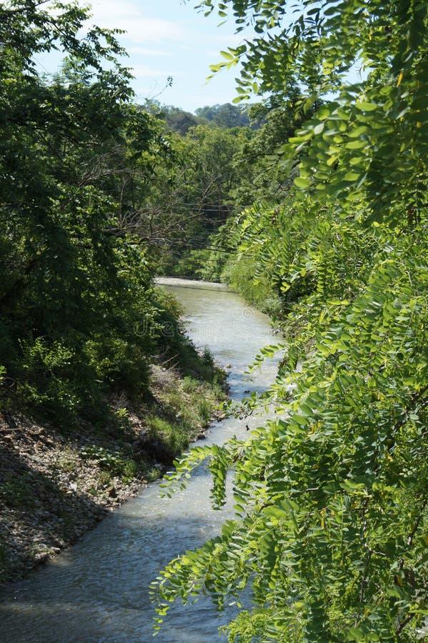 Лес и вода в Сочи стоковое фото