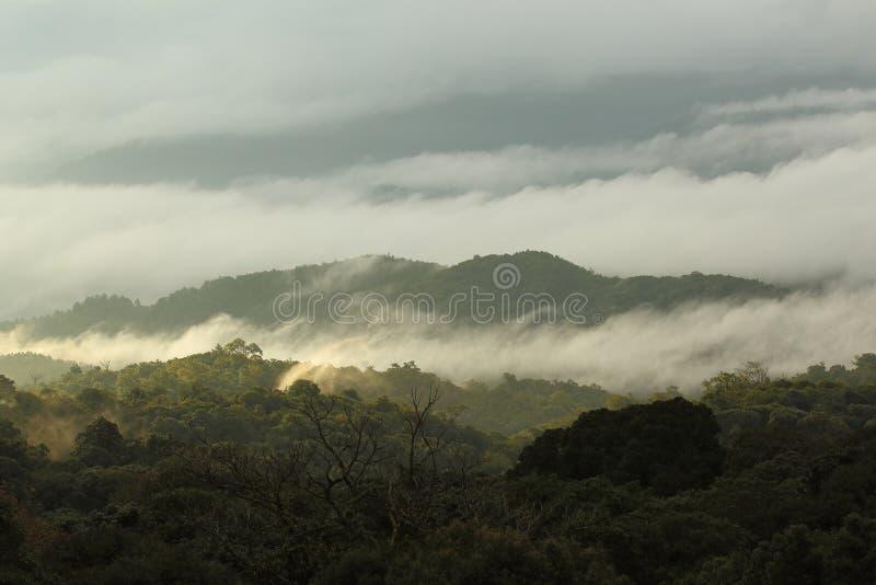 Лес и гора джунглей с туманом стоковое фото
