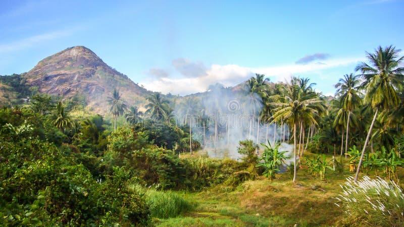 Лес и горный вид стоковое фото rf