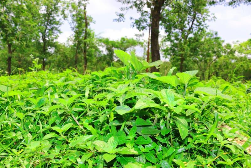 Лес и зеленое дерево джунглей Красивый естественный пейзаж Глубокие тропические джунгли r Предпосылка падения Солнечный свет леса стоковая фотография rf