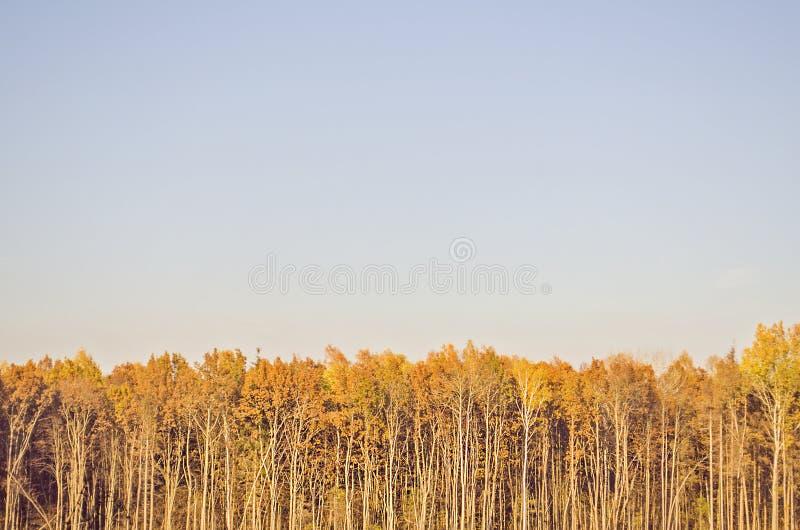 Лес и небо осени золота стоковые изображения rf