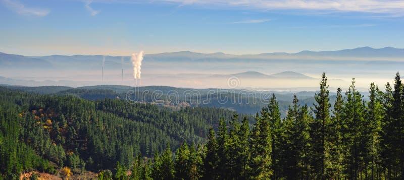 Лес и перезвоны стоковые изображения rf