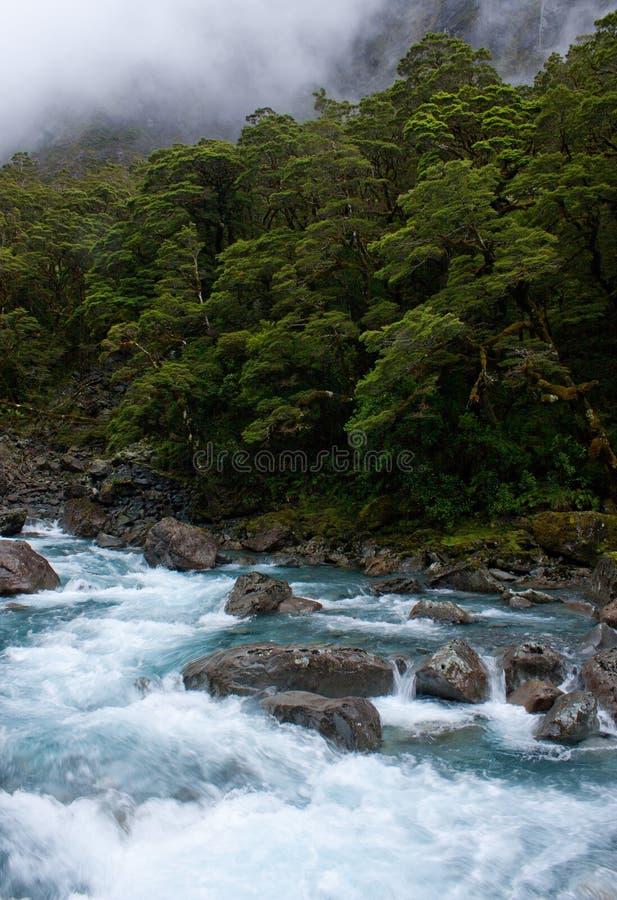 Лес и поток с утесами на заводи падений на шоссе Milford Sound в Fiordland в южном острове в Новой Зеландии стоковое фото rf