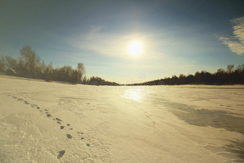 Лес и поле в снеге стоковая фотография
