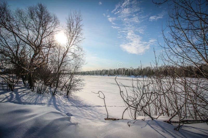Лес и поле в снеге стоковое фото