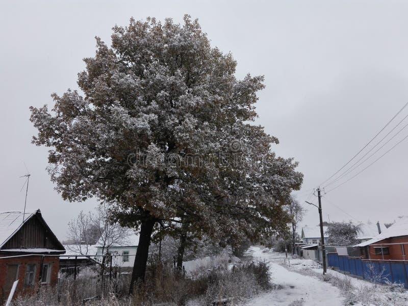 Лес и снег стоковая фотография