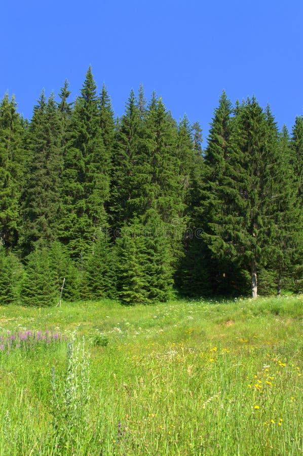 Лес и луг боли горы стоковое изображение