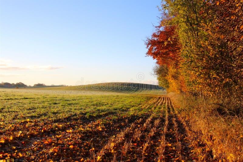 Лес и холм стоковое фото rf