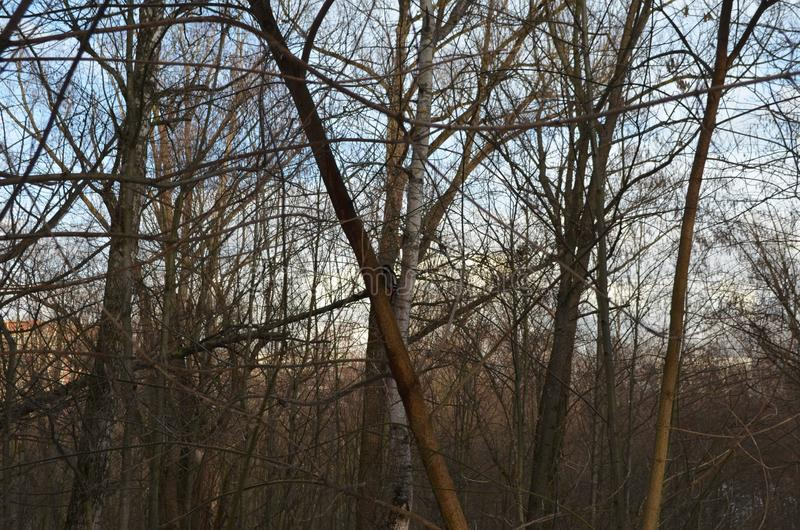 Лес, который подогнали доктора стоковое фото