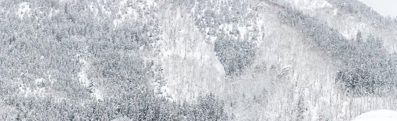 Лес ландшафта зимы стоковые фотографии rf