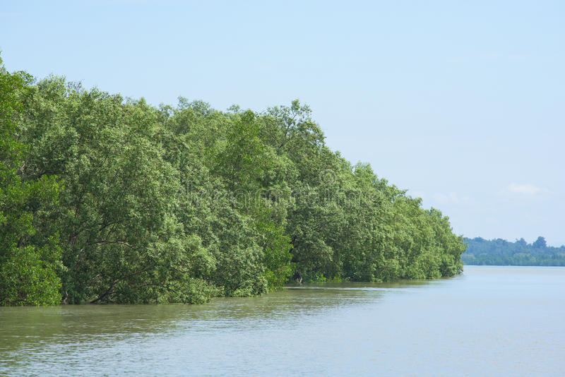 Лес мангровы в Мьянме стоковые изображения