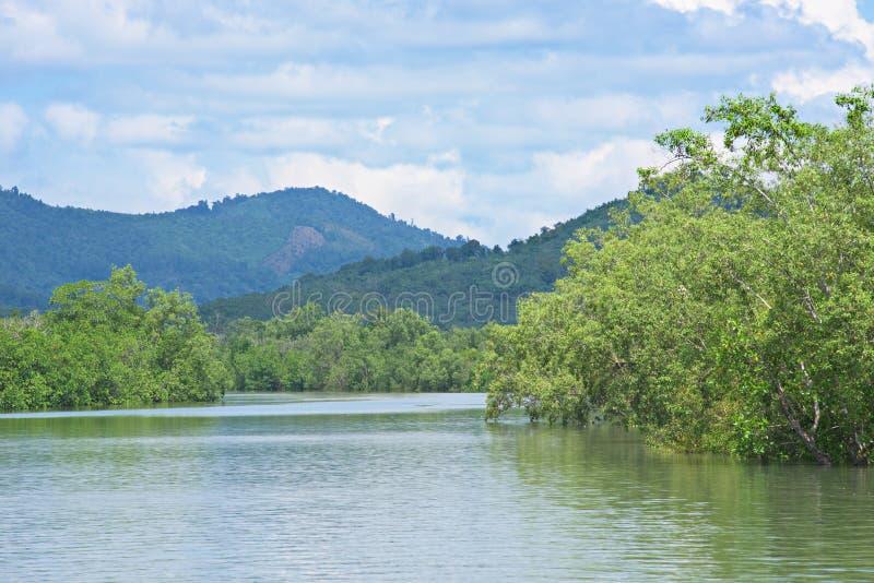 Лес мангровы в Мьянме стоковое изображение