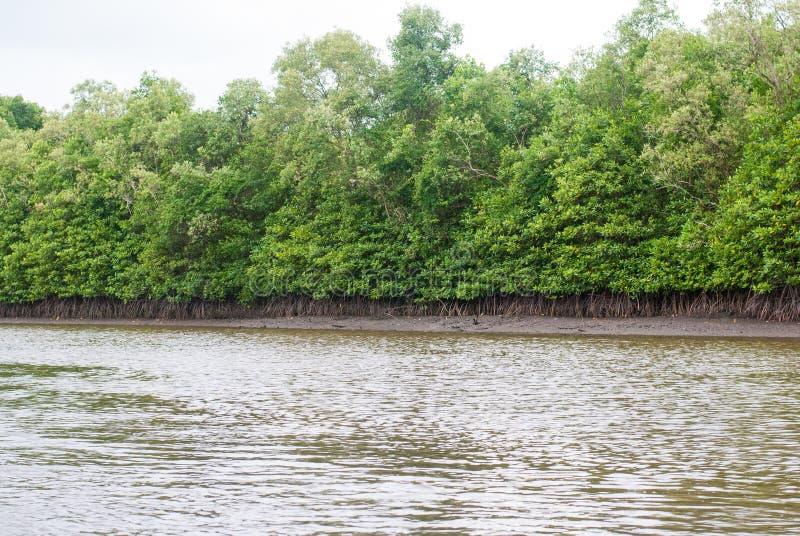 Лес мангровы и brackish путь воды вне к океану стоковая фотография rf