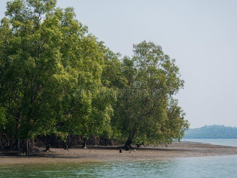 Лес мангровы на Kadan Kyun, Мьянме стоковые фото
