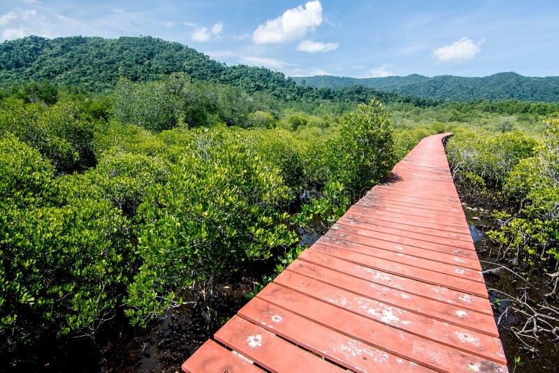 Лес мангровы с деревянным путем прогулки стоковые фото