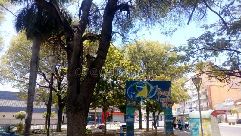 Лес момента части дерева зеленый стоковое изображение