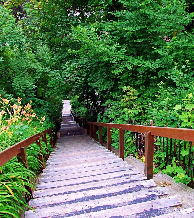 лес, мост, природа, путь, парк, древесина, деревянный, зеленая, дерево, деревья, след, тропа, ландшафт, дорожка, джунгли, сад, пу стоковая фотография rf