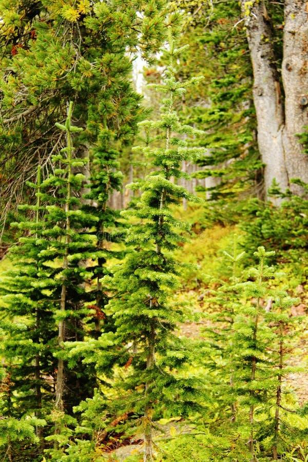 Лес младенца стоковое изображение