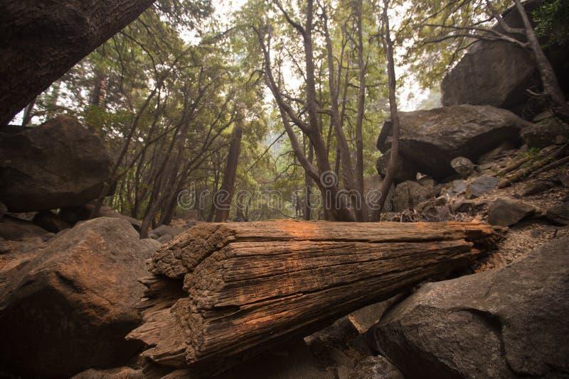 Лес национального парка Yosemite глубокий одичалый стоковое изображение