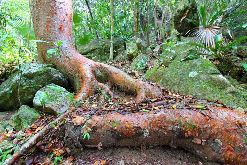 Лес национального парка Виргинских островов стоковая фотография