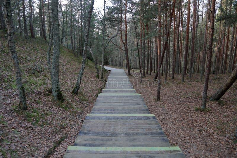 Лес на вертеле Curonian, Россия осени стоковые изображения rf