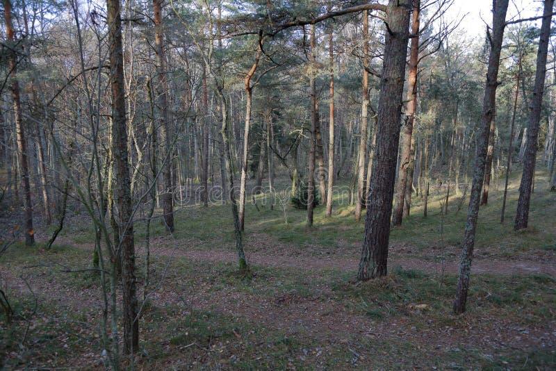 Лес на вертеле Curonian, Россия осени стоковые изображения