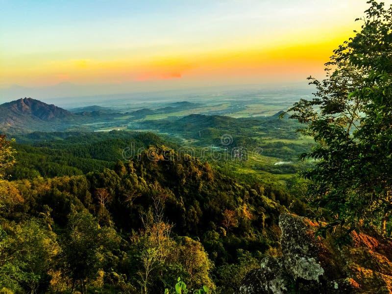 Лес на горе стоковое изображение