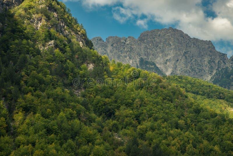 Лес на горных склонах и пасмурном горном пике стоковые изображения rf