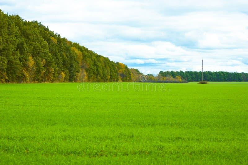 Лес на краю зеленого поля стоковое изображение rf