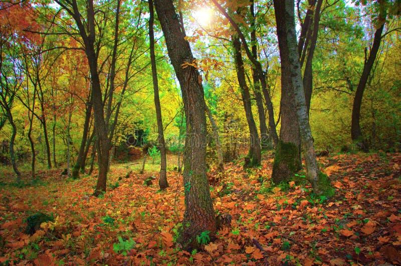 Лес на мифической горе Олимп - Греция стоковое изображение