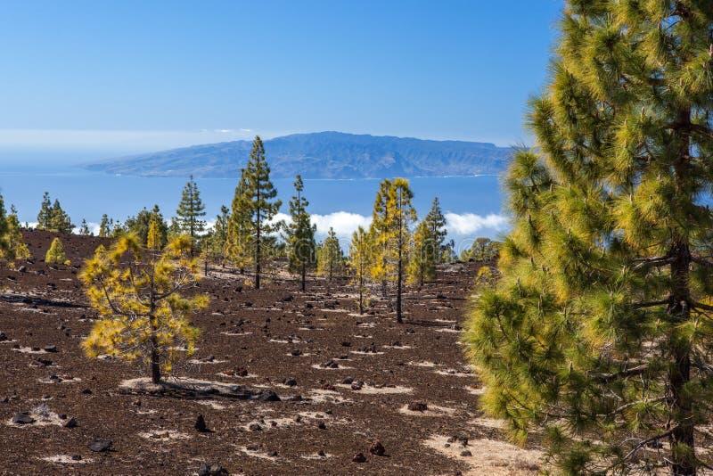 Download Лес на поле лавы стоковое фото. изображение насчитывающей листья - 40587038