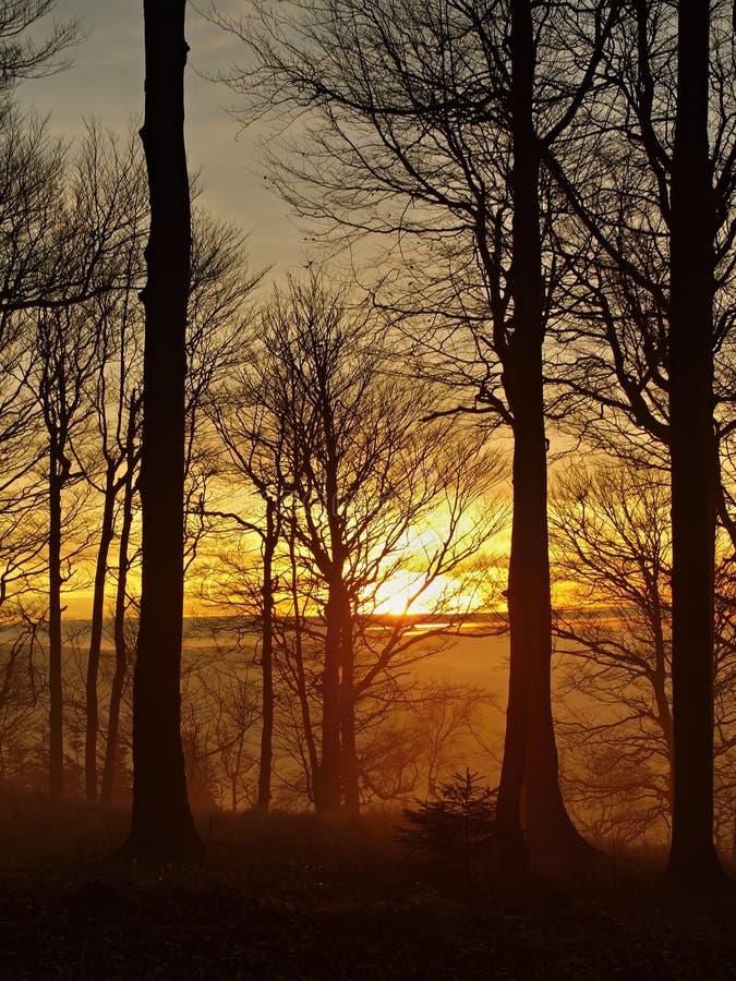 Лес на холме увеличил от предпосылки осени раннего утра туманной. стоковая фотография rf