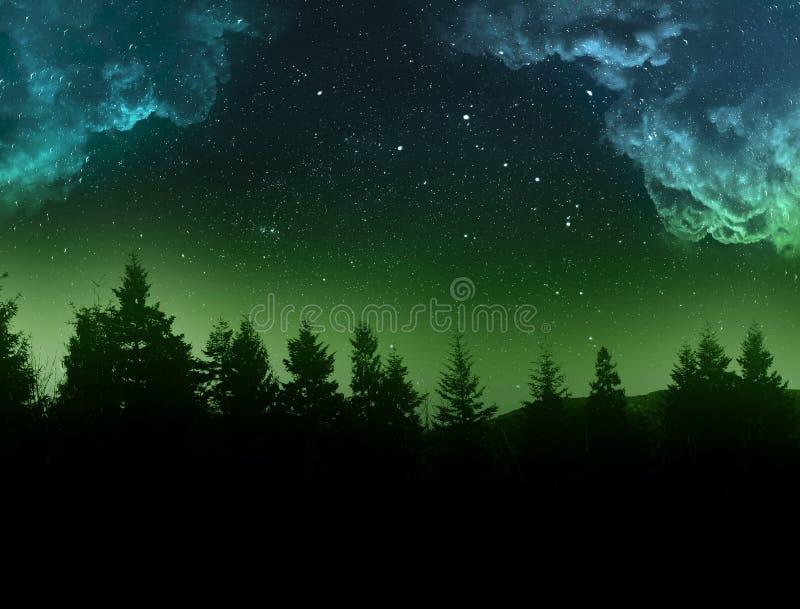 Лес ночи стоковые изображения