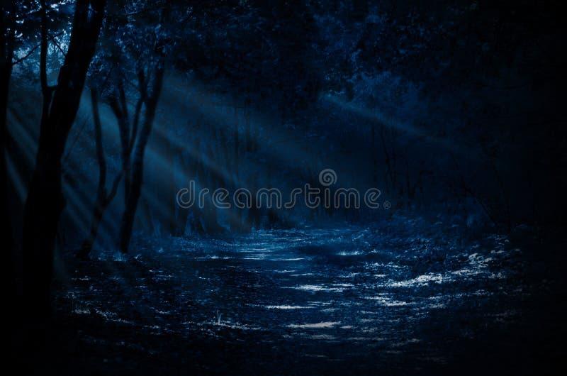 Лес ночи стоковые фотографии rf