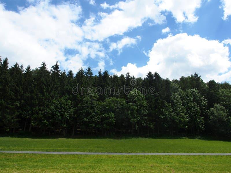 Лес, дорога и голубое облачное небо в Европе стоковая фотография
