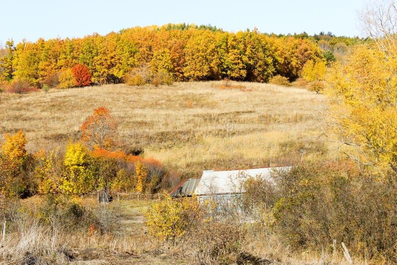 Лес осени в после полудня стоковые фотографии rf
